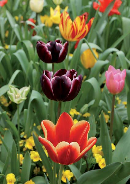 Klappkarte - Blumensegen
