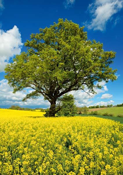 Klappkarte - Stark wie ein Baum