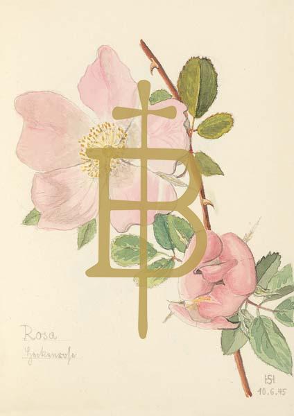 Klappkarte - Die Rose, die Liebe schenkt