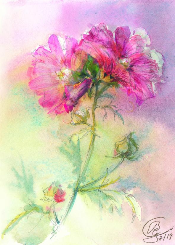 Kunst-Postkarte - Rosen-Malve